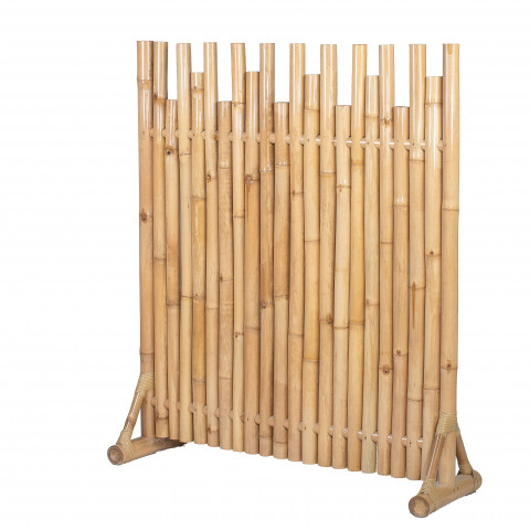 Palissade bambou sur pied