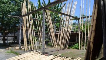 Entretien du bambou, astuces et conseils pour entretenir le bambou ...